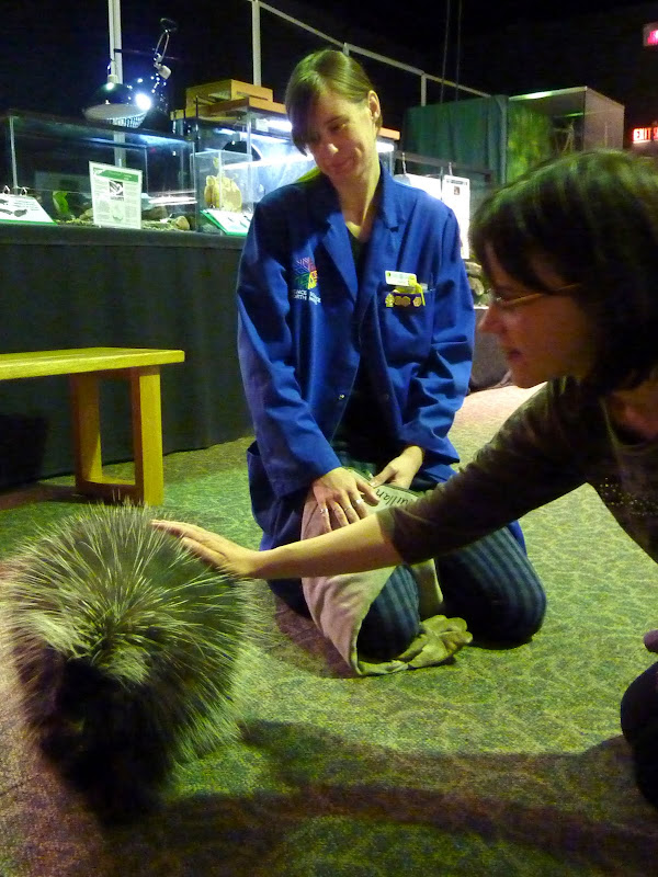 Petting a porcupine at Science North