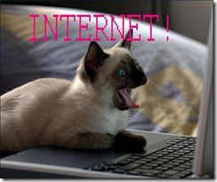 funny_pictures_cat_internet1