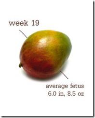week 19 mango