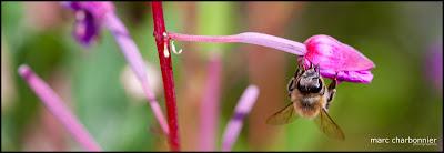 photo panoramique d'une abeille