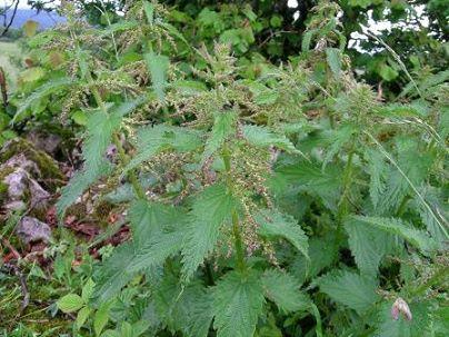 Plantes utiles aux chevaux Tx3k25n0