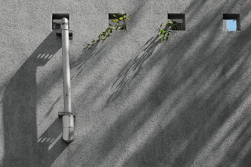 [寂寞城市] 葉與光