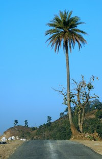 MountAbu