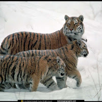 Eu e meus jovens andando na neve