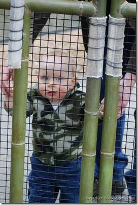 Mike in the red panda cage!