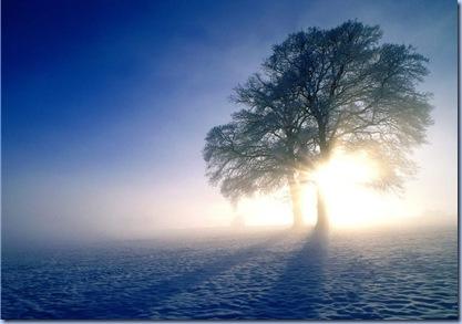 winter-tree-picture-1280x1024-0072