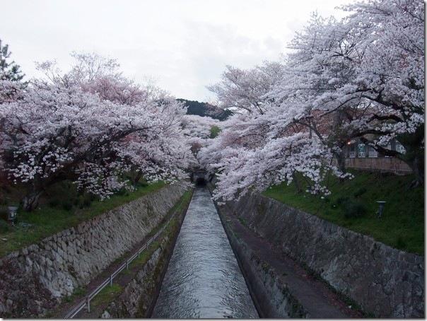 三井寺到着後スグに歩いて撮影に向かった際の一枚