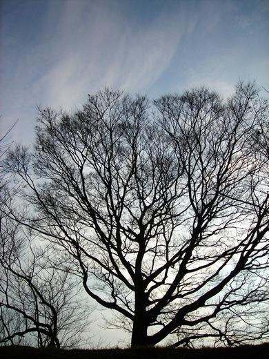 樹 itsuki