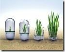 2009_05_11 - Seed Bomb Plants