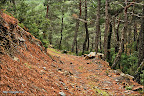 Orman Yolları