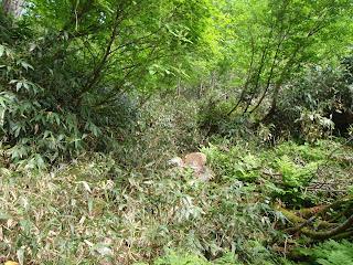 沢筋は笹藪の中に消えている。