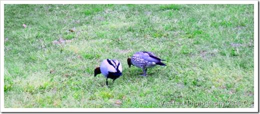 DuckBrunchDSC01792(1)