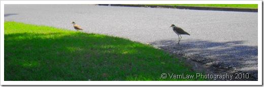 BirdsWalkDSC02158(1)