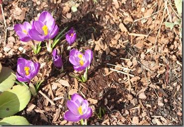 spring 104