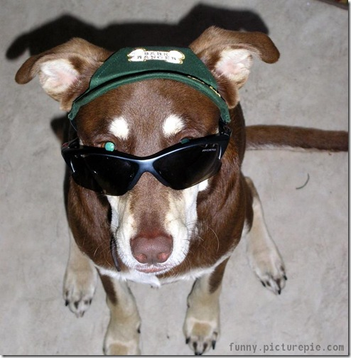 dog_sunglasses