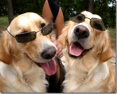 dogs_wearing_sunglasses