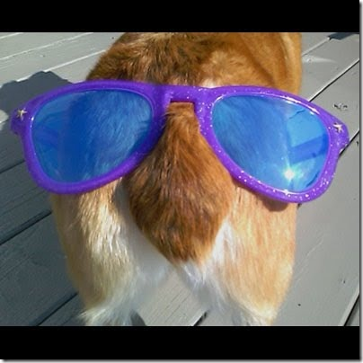 sunglasses_dog_butt_L4_0020_Layer_6_full