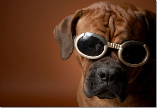 Dog_wearing_sunglasses_6a23