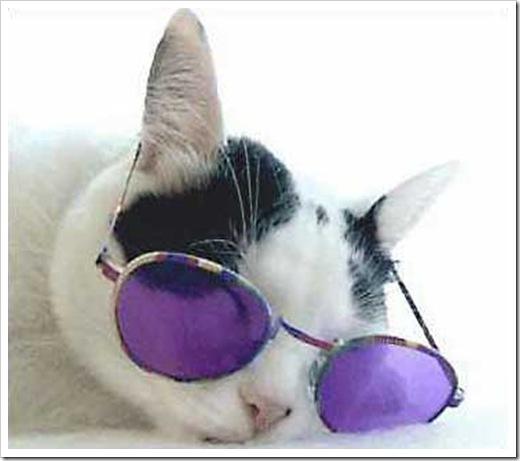 catSunglasses