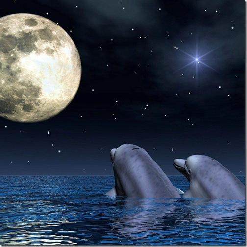 fotos-amor-delfines
