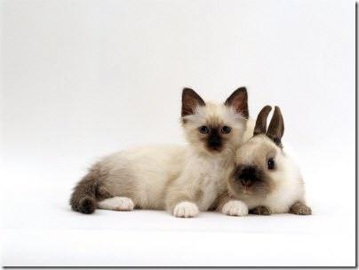 animales parecidos (11)