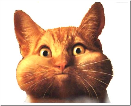 35Fat_Cat-med3