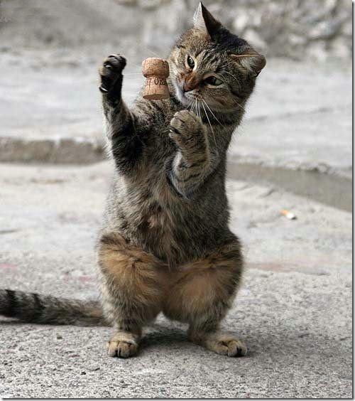 gato jugando con corcho de champan