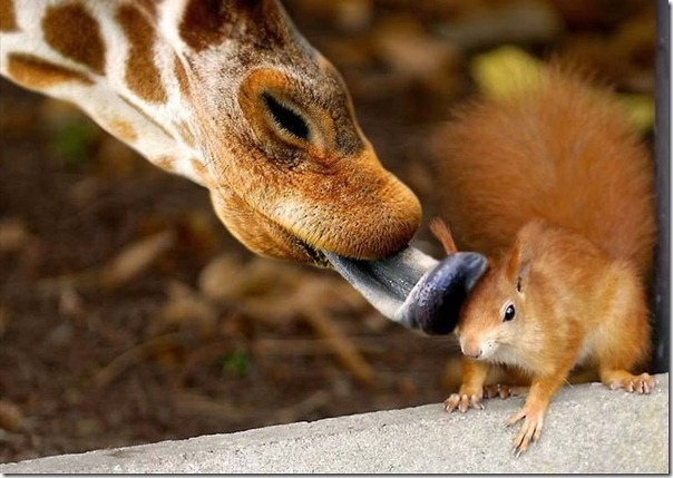 animales blogdeimagenes (15)