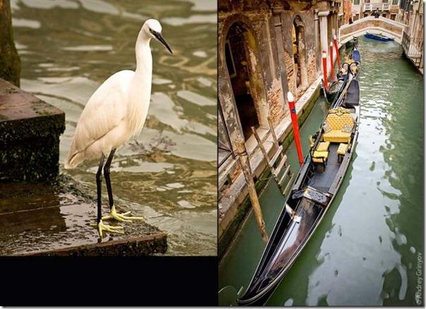 Venice08