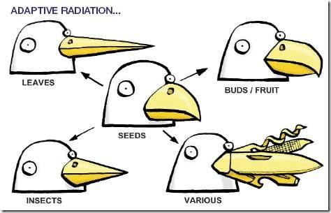 radiacionadaptativa