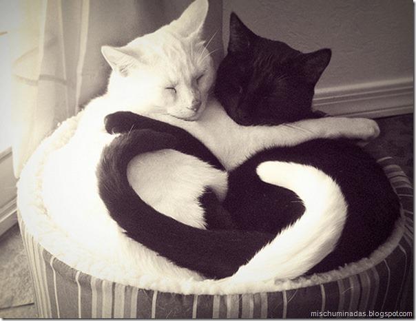 gatos migallinero (5)