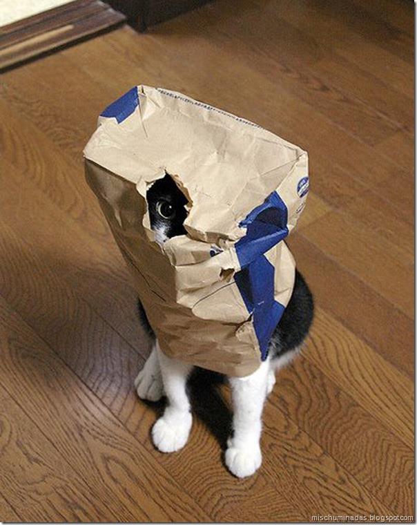 gatos migallinero (7)