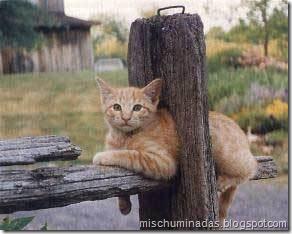 gatos migallinero (15)