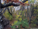 путешествие по крыму буковый лес горный на пути к демерджи пахкал кая лысый иван