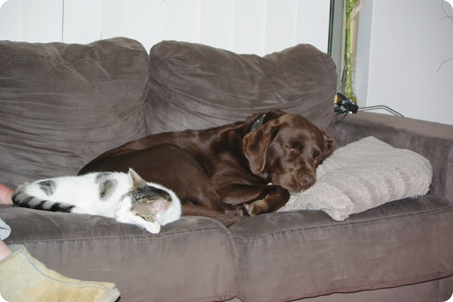 Ned & Bodie in a typical position