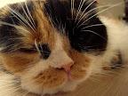 猫のまほう エディちゃん