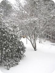 2010 snowstorm4