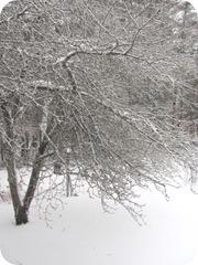 2010 snowstorm 5