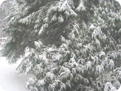 2010 snowstorm 1