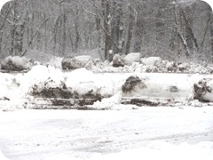 2010 snowstorm 19