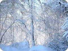 1.27.11 snowstorm sideyard4