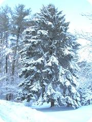 1.27.11 snowstorm sideyard7