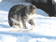1-31-11 stray kitty