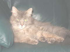 Fluffpuff lying on the couch
