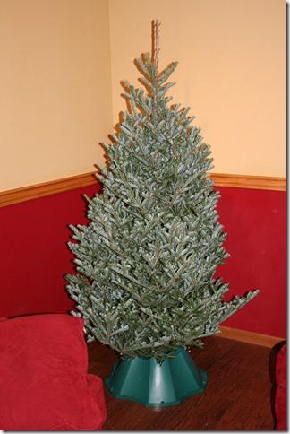 2010-12-12 Christmas Tree