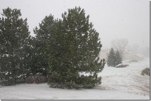 2011-01-19 Snow Storm (3)