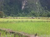 nomad4ever_laos_vang_vien_CIMG0665.jpg