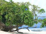 nomad4ever_indonesia_sulawesi_pulau_gangga_CIMG2612.jpg
