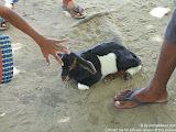 nomad4ever_indonesia_sulawesi_pulau_gangga_CIMG2616.jpg