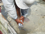 nomad4ever_indonesia_sulawesi_pulau_gangga_CIMG2669.jpg
